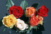 Как правильно выбрать цветы в подарок?