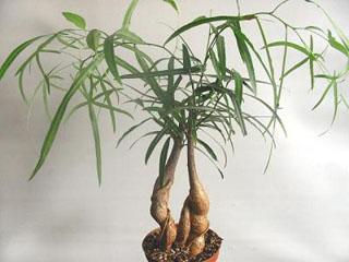 Какие растения сейчас в моде