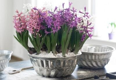 Зарядка оптимизмом весенними цветами