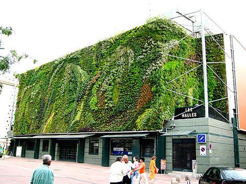 Новинка в области дизайна: зеленые стены